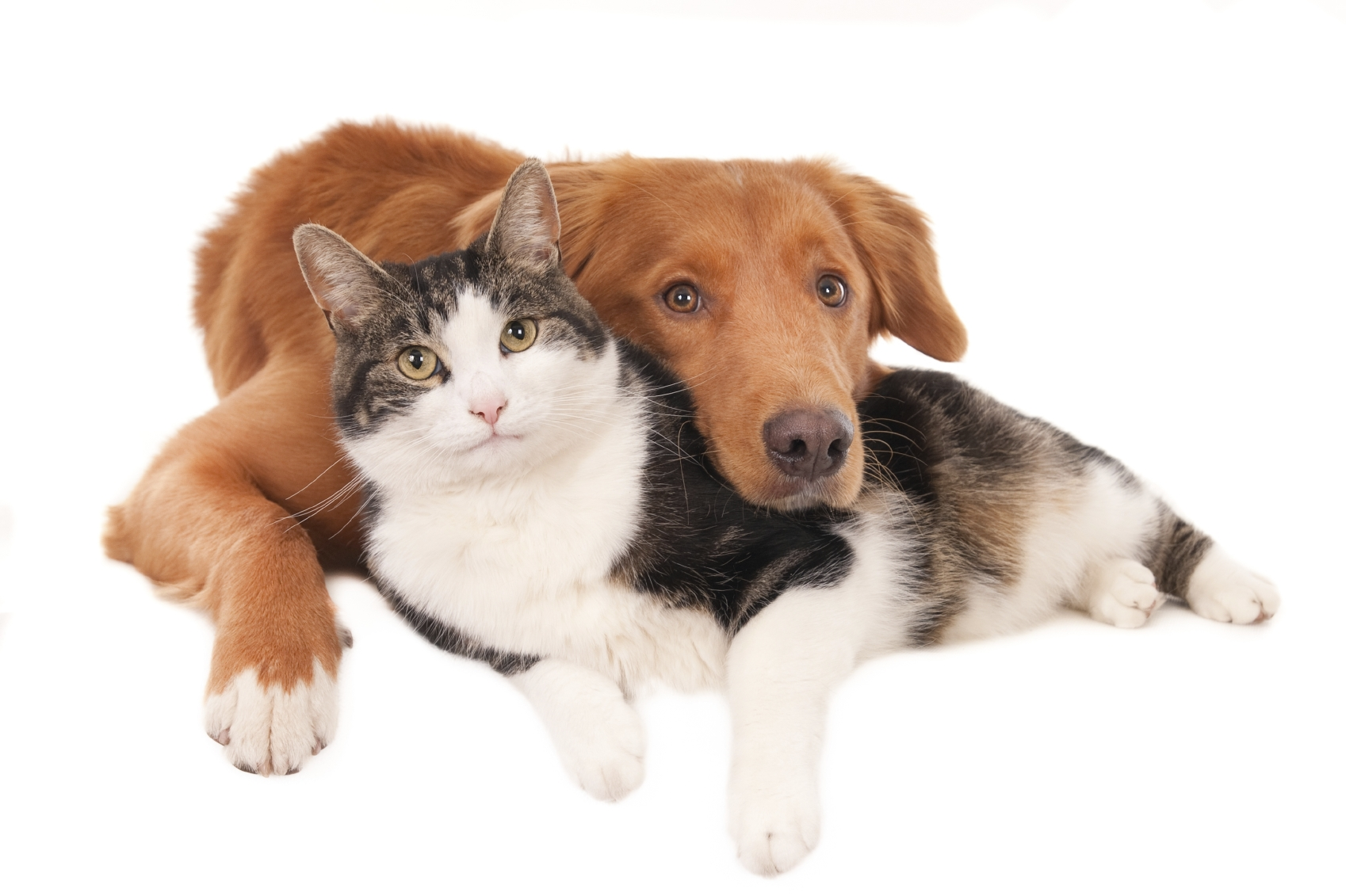 Bringing Home A New Cat To A Dog